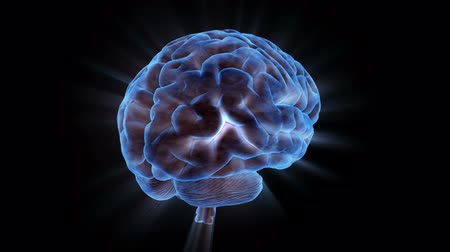 gergin : Brainstorm 104: Stock video of a rotating human brain electrically charged with thought (Loop).