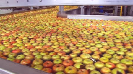 üretim : Apples in a production