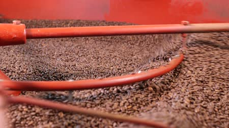 drink industry : Close up roasted coffee beans being turned & stirred in industrial machine