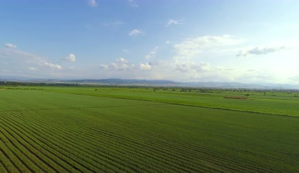 üretmek : aerial view of green onions field