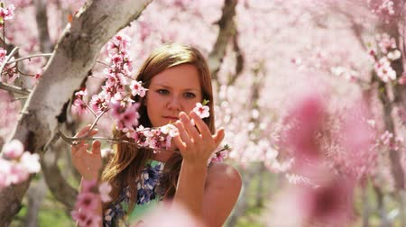 smelling : slow motion, girl admiring pink blossoms in orchard Stock Footage