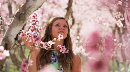 skóra : slow motion, girl admiring pink blossoms in orchard Wideo