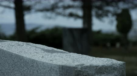 deceased : slow motion rose placed on top of grave stone in cemetary Stock Footage