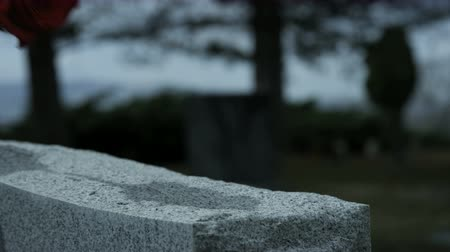 gravestone : slow motion rose placed on top of grave stone in cemetary Stock Footage