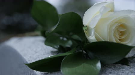 надгробие : slow motion close up of rose blowing in breeze on grave stone in cemetary