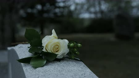 gravestone : slow motion panning shot of rose on grave stone in cemetary Stock Footage