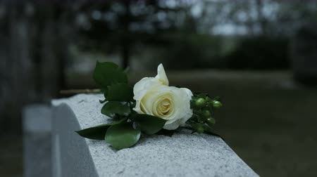 loved : slow motion panning shot of rose on grave stone in cemetary Stock Footage