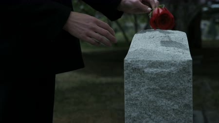 demise : slow motion womans hands placing rose on grave stone in cemetery