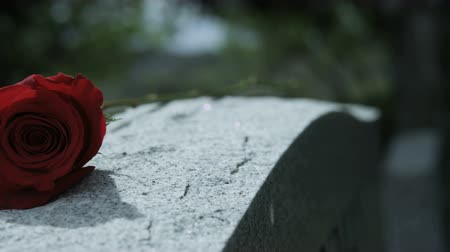 demise : close up rose on grave stone in cemetery Stock Footage