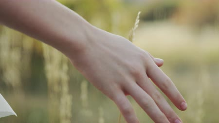 close up of hand touching wheat in field Stock Footage