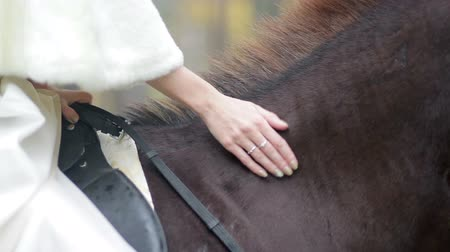 casamento : Bride sitting on a horse and stroking it. Stock Footage