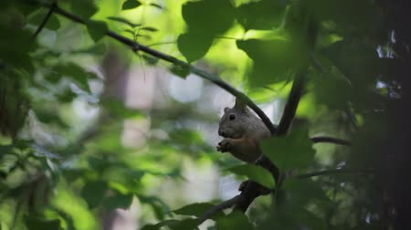 белка : Squirrel eating nuts on a tree. Close-up.