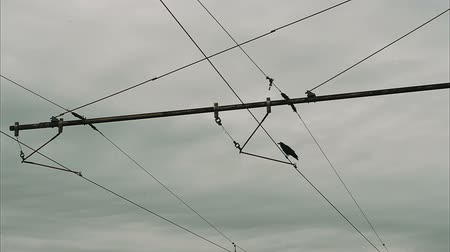 kable : raven sitting on wires Wideo