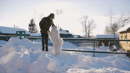 lehúzó : man stroking a white dog in the outdoor