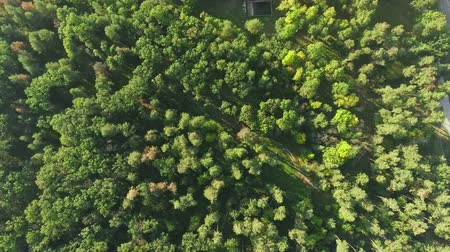 Aerial view camera moves rising up from green forest of dense mixed tree tops