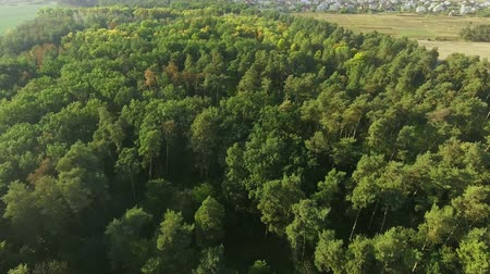 Aerial View. Flying over the beautiful forest trees. Landscape panorama.