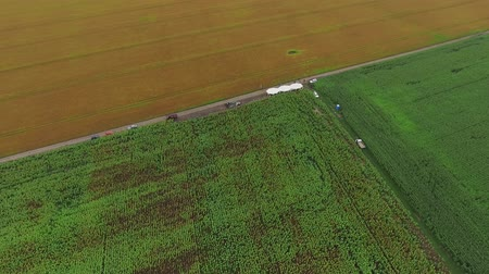 hozam : Video Footage aerial view combines harvesting, top view