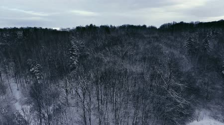 River in winter. Snowy winter. Winter shooting from the drone.