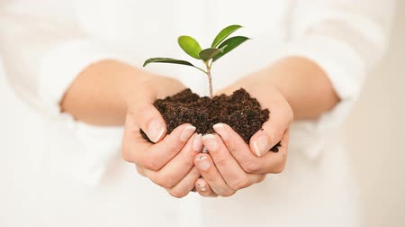 kezek : Handful of Soil with Young Plant Growing. Concept and symbol of growth, care, sustainability, protecting the earth, ecology and green environment. Caucasian female hands.
