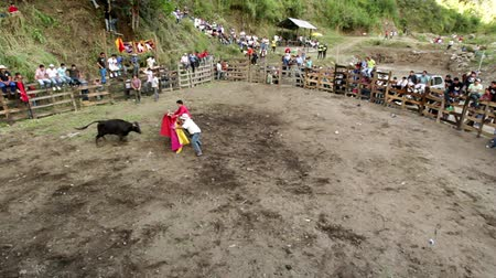 bullfight : BANOS DE AGUA SANTA,ECUADOR - 28 OCTOBER 2012:Improvised bullfights for the city ceremony gives people the opportunity to try out their skills in bullfigting,held in Banos de Agua Santa,Ecuador, 28 OCTOBER 2012 Stock Footage