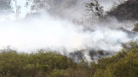 hot news : Camera pans RL over small bush fire in Ecuadorian Andes from close range