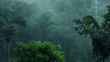 chuva : Heavy rain over clouds forest in Andes, static shot with audio