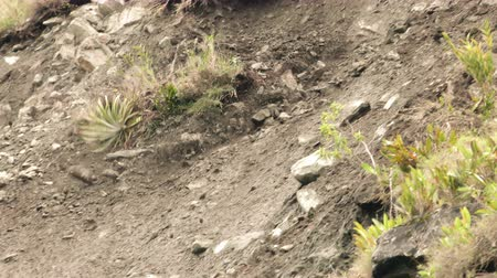 földrengés : Large area landslide induced by earthquake, slow motion tracking shot in Ecuadorian rainforest