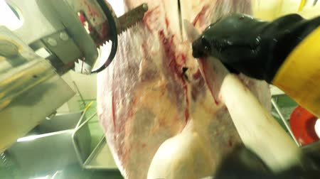necessity : Chest mounted camera first person view of a butcher cutting a cow carcass in red meat slaughterhouse processing plant, food industry related
