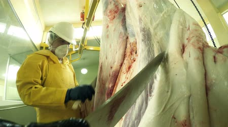 kırım : Tandem animal skinning process in a slaughterhouse, first person point of view footage