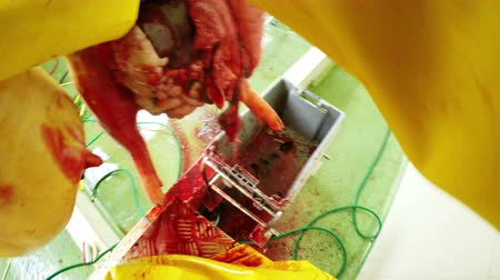 necessity : Butcher eviscerating a pork carcass in a action game style shot, first person view from a helmet mounted camera Stock Footage