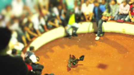 cockfighting : Blurred Group Of Adult People Watching With Interest A Legal Cockfight In Ecuador