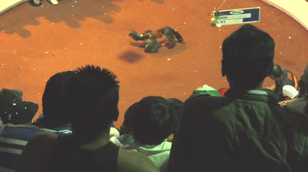 cockfighting : Cockfight At Public Arena With Group Of Unidentifiable People In The Foreground Stock Footage