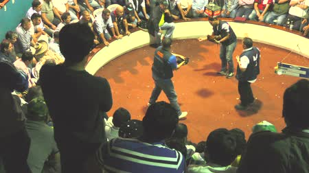 cockfight : Banos, Ecuador - 06 February 2016: Adult Unidentified People Watching A Legal Cockfight At Public Arena In Banos On February 06, 2016 Stock Footage