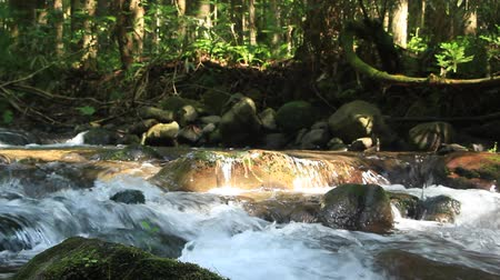 Crearwater River Flow in Scenic Japan Forest