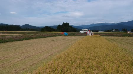 typhoon : Aerial view of Rice harvesting in Japan Stock Footage