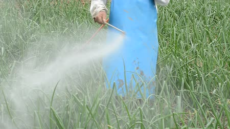 commercial cultivation : farmer spraying pesticide at onion field in thailand