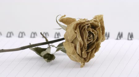 dried rose flower on notebook page