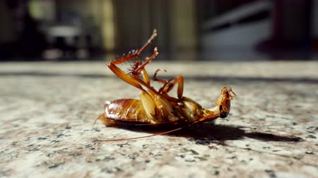Dead cockroach on floor, pest control concept