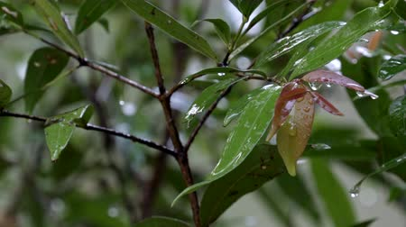 nature fresh green leaf under heavy rain