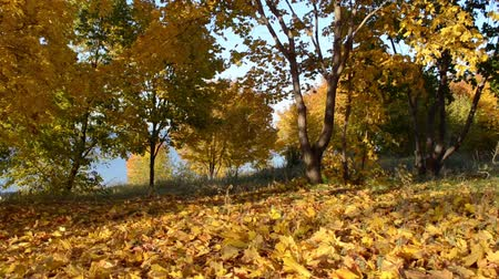 view of autumn park, yellow leaves on trees Dostupné videozáznamy