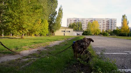 the dog is eating grass in the park Dostupné videozáznamy