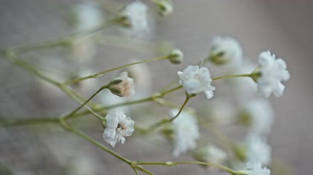 bez : small white flowers on canvas.