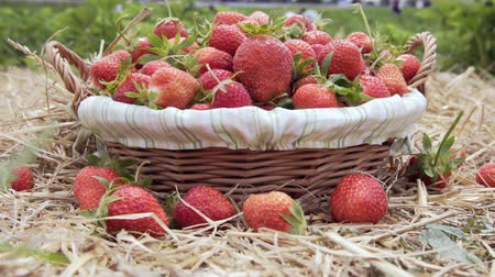 ripe strawberry in basket on straw.