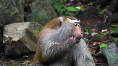 borneo : monkey in the rainforest on the rocks