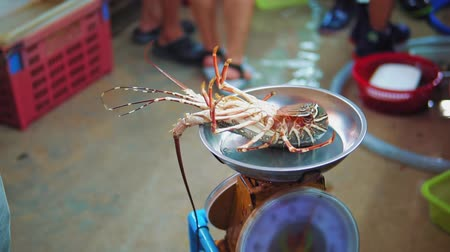 для продажи : Slow motion shots of spiny lobster on the scales for sale at night seafood market Стоковые видеозаписи