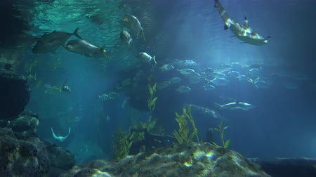 School of fishes swim near the water surface, view from below. Sunlight through underwater