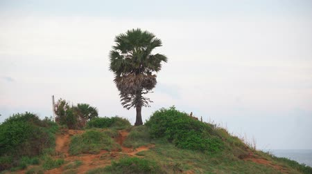 tropical palm tree on the hill of the island. sea coast Стоковые видеозаписи
