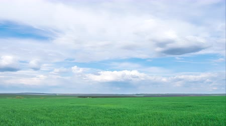 timelapse, green spring field with clouds. spring mood. Archivo de Video