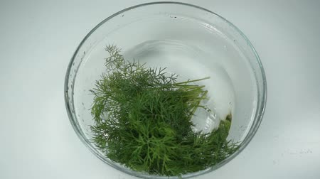 smaak : Fresh dill bunch falling into glass bowl, Slow motion. Dill branches fall down and splashing water at white background