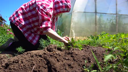aliment : Farm work on the plot on a Sunny day. The farmer hands weeding young bushes